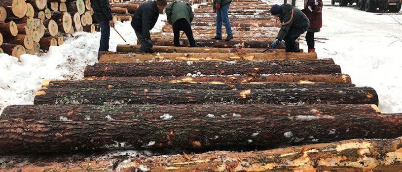Визуальная сортировка сосновых круглых лесоматериалов